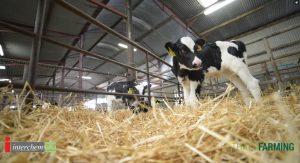 Calf-health-check