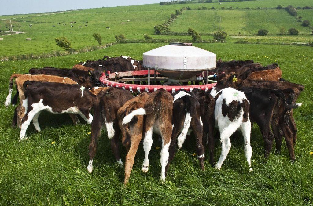 10 steps every farmer needs to follow when feeding calves
