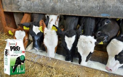 3 reasons to feed calf milk replacer over whole milk